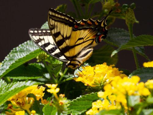 Claudine Besse photographe - Photo Papillon